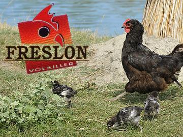 pouletchallan2