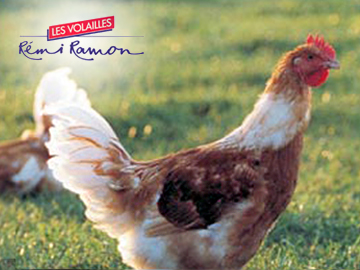 pouletjaune2